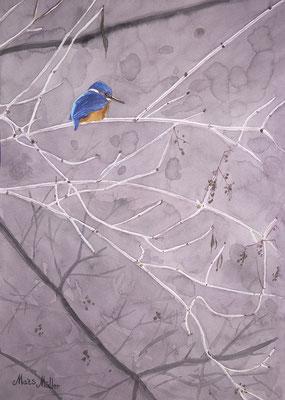 MatsMüller, Kungsfiskare, Kingfisher, 40x30cm