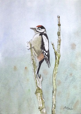 MatsMüller, Större Hackspett, Great Spotted Woodpecker, 40x30cm