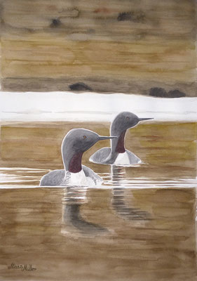 MatsMüller, Smålom, Red-throated Diver, 40x30cm