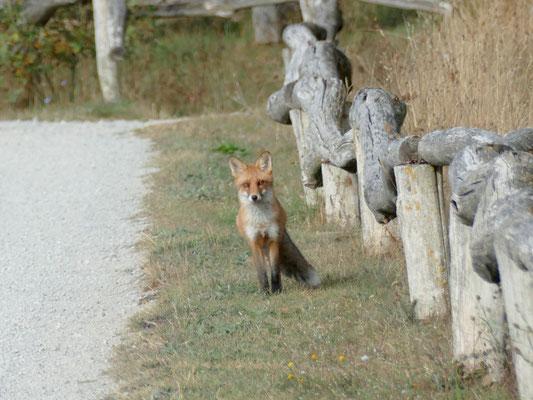 Die Teilnehmer wurden von einem Fuchs begrüßt