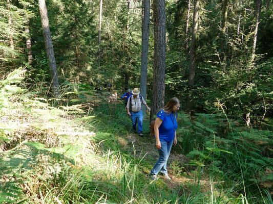 Ein vielgestaltiger Wald ist stabiler als ein uniformer Fichtenforst.