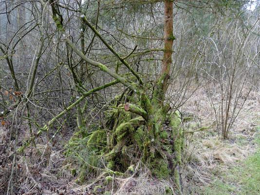 Ein Auenwald besitzt eine eigene romantische Atmosphäre.
