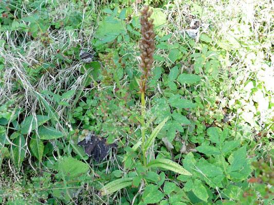 Auch wenn sie schon verblüht sind, ist es schön Orchideen zu finden
