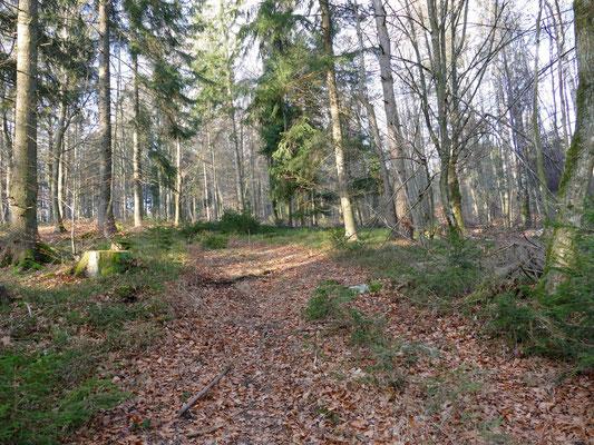 Der Wald wird von Buchen und Fichten dominiert.