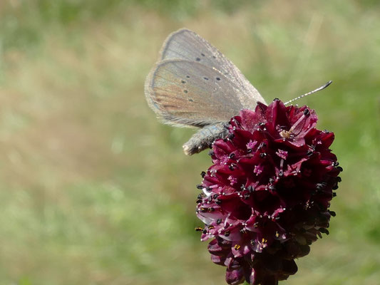 Ein Schmetterling schillert in der Morgensonne