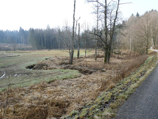 Das Feuchtbiotop am Perlbach.