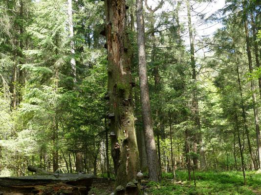 Totholz ist lebendiger Lebensraum für sehr viele Lebewesen