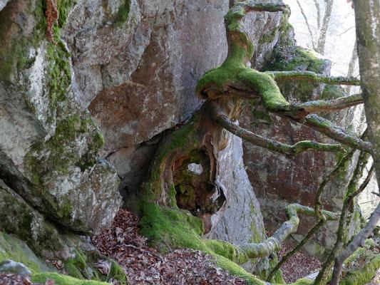 Eine Baumskulptur am Gneis-Massiv des Büchelsteins.