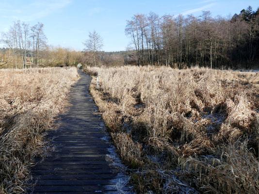 Ein Holzbohlensteg führt durch die Feuchtwiesen.