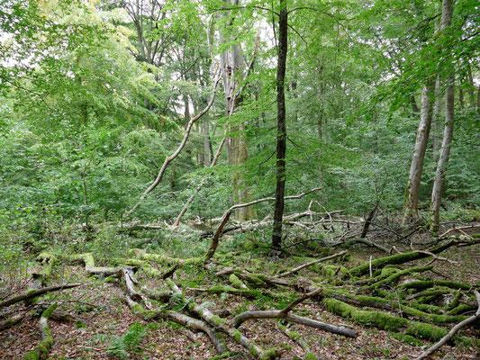 Wenn alte Bäume sterben entsteht Platz für neuen Aufwuchs