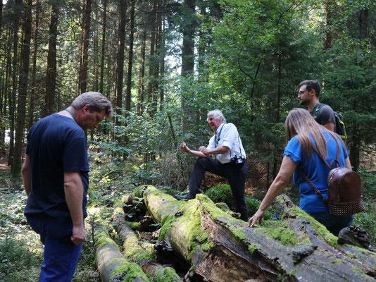 Totholz ist ein Lebensraum für viele Arten. Foto: Martin Sigl