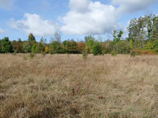 Zum Nationalpark gehören auch extensiv bewirtschaftete Wiesen