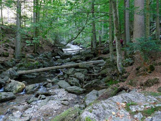 Zunächst ging es durch das wildromantische Tal des Riesbachs