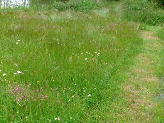 Wenn nur die Laufwege kurz gemäht werden, kann man eine artenreiche Wiese auch auf einem kleinen Grundstück erhalten