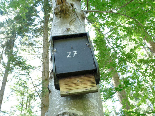 Mit Nistkästen wird die Ansiedelung von Fledermäusen unterstützt