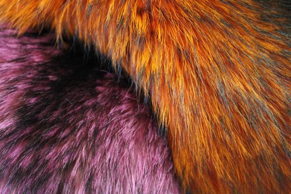 Raccoon colorato