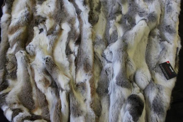 Bandine di lapin leprato e cinciilla pance