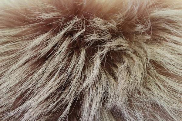 Raccoon albino colorato