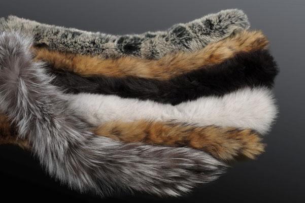 bordi in rex, visone, volpe, raccoon
