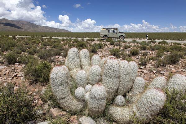 Auf dem Altiplano in den Anden