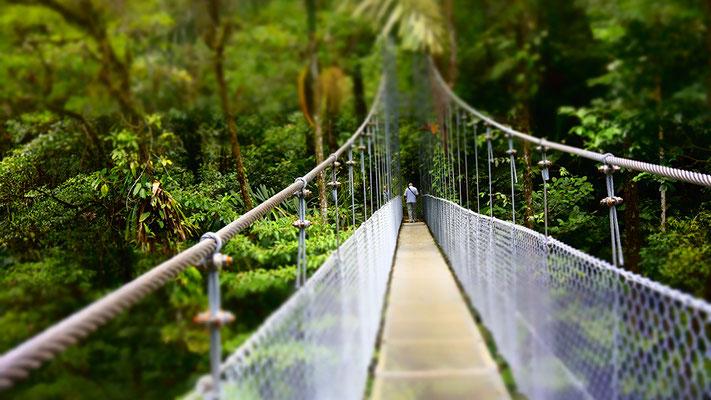 Hängebrücke im Regenwald Costa Rica