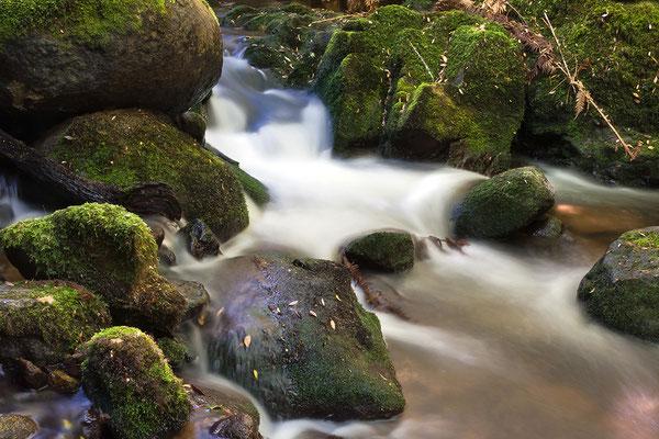 Bach auf Tasmanien, Australien