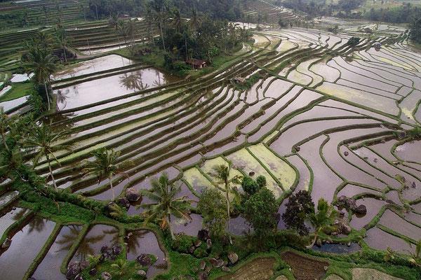 Reisterassen auf Bali, Indonesien