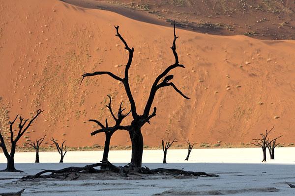 abgestorbene Akazienbäume im Dead Vlei/ Namib Naukluft Nationalpark Namibia