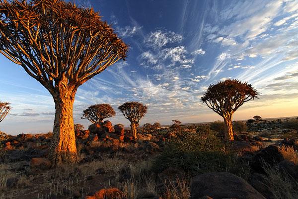 Köcherbaumwald bei Keetmannshop Namibia
