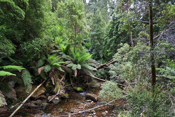 Tasmanische Landschaft, Australien