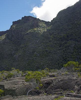 Naissance de vie -  Ile de la Réunion - Avril 2016.