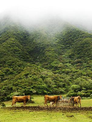 La Plaine des Cafres 2 - Île de la Réunion - Juin 2016.