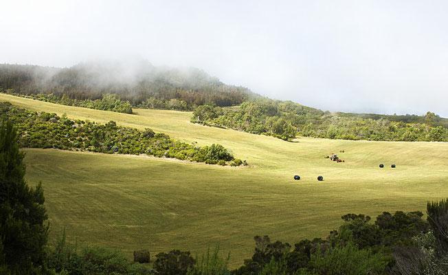 La Plaine des Cafres 6 - Île de la Réunion - Juin 2016.