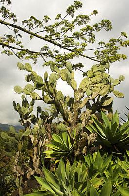 Parc botanique des Mascareignes 3 - St Leu - Ile de la Réunion - Septembre 2016.