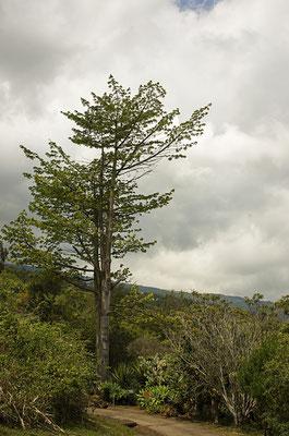 Parc botanique des Mascareignes 2 - St Leu - Ile de la Réunion - Septembre 2016.