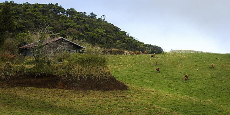 La Plaine des Cafres 4 - Île de la Réunion - Juin 2016.