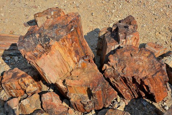 Namibia - Rundfahrt - Reise - Rundreise - Versteinerter Wald