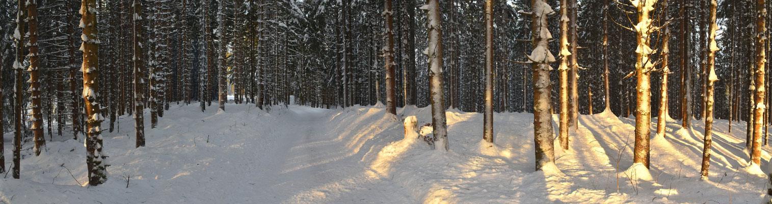 Panorama - Berge - Alpen - Wanderung - Winter - Schnee - Wald