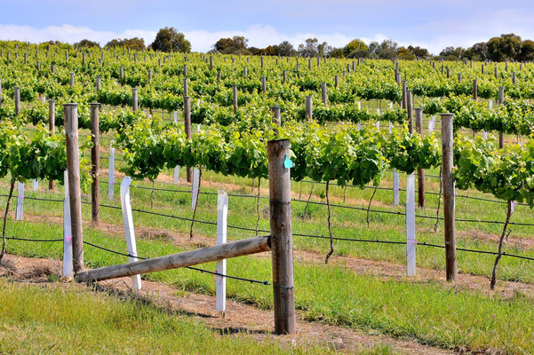 Australien, Australia, South Australia, Kangaroo Island, Landschaft, Weinbau