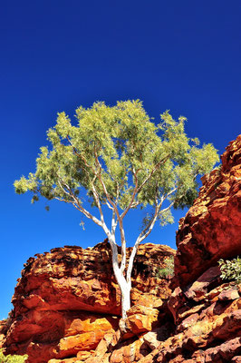Australia - Australien -Zentralaustralien - Outback - Northern Territory - Landschaft - Blauer Himmel - Rot - Berg - Felsen - Kings Canyon