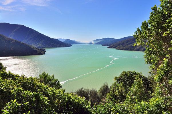 Neuseeland, Südinsel, Wald, Küste, See, Meer, Picton