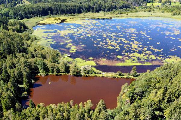 Drohnenfoto - Vogelperspektive - Drohne - Drohnenbild - Luftaufnahme - See - Deixlfurter See - Tutzing - Fünfseenland
