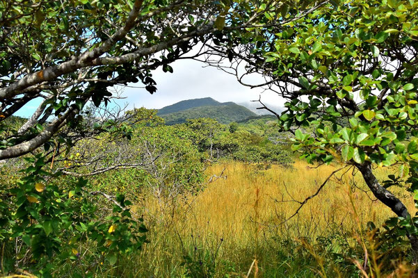Pura Vida - Costa Rica - Rincon de la Vieja