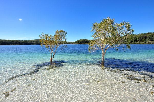 Australien, Australia, Ostaustralien, Ostküste, Queensland, Landschaft, See, Weisser Sandstrand, Fraser Island, Lake Mckenzie