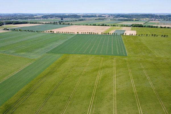 Vogelperspektive, Drohnenfoto, Drohnenbild, Luftaufnahme, Bayern, Feld, Grün, Sommer, Land, Acker