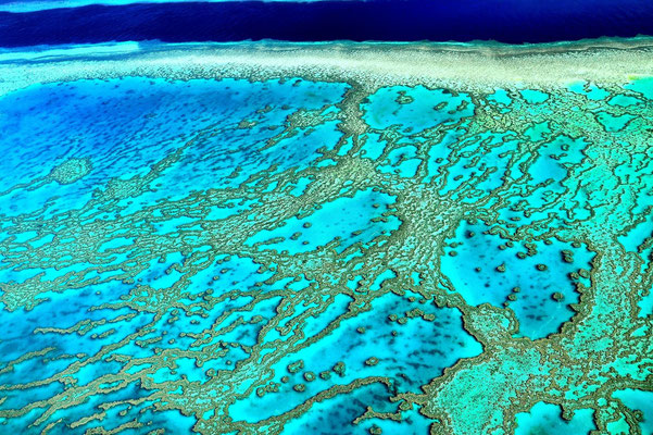 Vogelperspektive, Schattenspiel, Luftaufnahme, Feld, Grün, Streifen, Bäume, Schatten, Muster, Flecken, See, Korallenriff