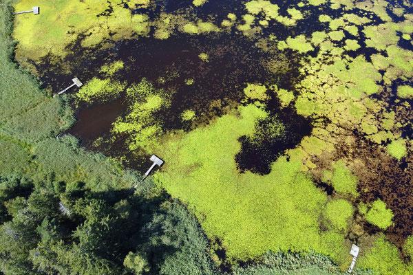 Drohnenfoto - Vogelperspektive - Drohne - Drohnenbild - Luftaufnahme - See - Deixlfurter See - Tutzing - Fünfseenland - Muster - Formationen