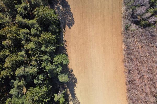 Vogelperspektive, Drohnenfoto, Landschaft, Drohnenbild, Schattenspiel, Luftaufnahme, Feld, Wald, Grün, Streifen, Bäume, Schatten, Muster, Flecken