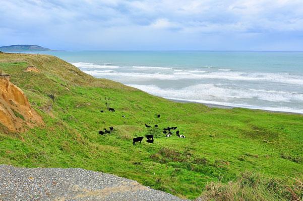 Neuseeland, Südinsel, Küste, Meer
