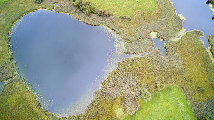 Drohnenfoto - Vogelperspektive - Drohne - Drohnenbild - Luftaufnahme - See - Bunt - Farbenfroh - Herbst